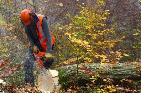Photo pour Un bûcheron au travail - image libre de droit