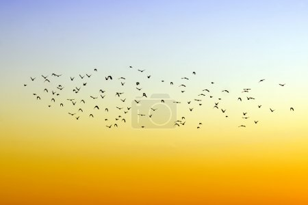 Flight of birds...