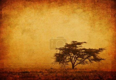 Photo pour Arbre solitaire dans la brume, arrière-plan grunge, nature automne saison, paysage africain le matin, sépia tonique - image libre de droit