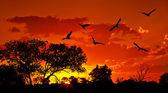 """Постер, картина, фотообои """"ландшафт Африки с теплый закат"""""""