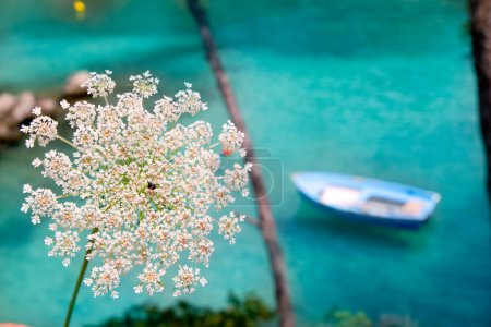 Balearic islands with wild carrot and turquoise Mediterranean