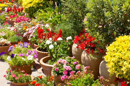 Spanish flowers garden detail in spain