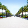 Beach boulevard in Salou with palm trees in Tarrag...