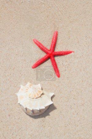 Seashell and starfish in white sand beach