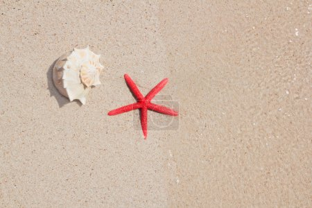 Seashell and starfish in white sand beach