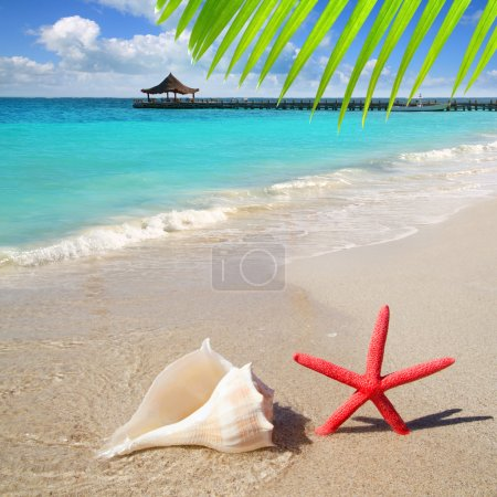 Photo for Beach with starfish and seashell in white sand and tropical hut - Royalty Free Image
