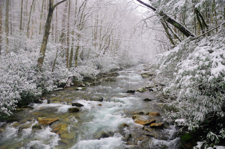 Spring snow in the smokies