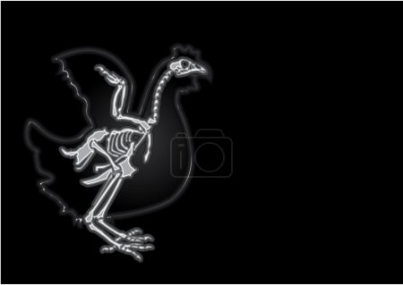 X-ray of the live chicken...