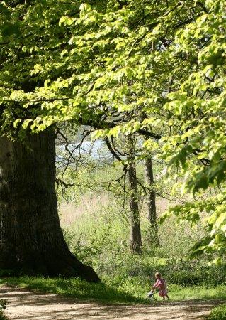 Photo pour Chemin dans la forêt - image libre de droit