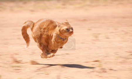 Orange tabby cat running full speed across red sand