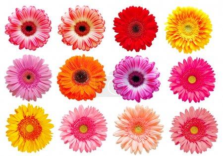 Photo pour Gerber fleur isolée sur fond blanc - image libre de droit