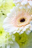 Květinové pozadí: detailní záběr pastelově laděných květiny