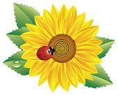 Sunflower and red ladybird