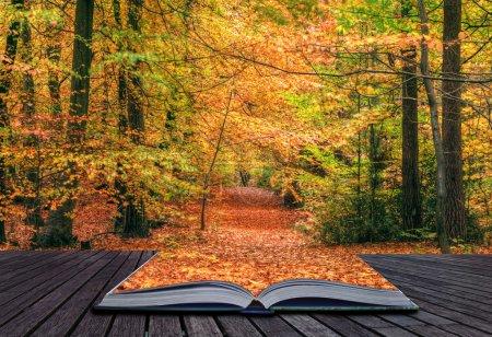 Photo pour Concept créatif idée de Belle automne scène de forêt d'automne avec des couleurs vives et d'excellents détails sortant des pages dans un livre magique - image libre de droit