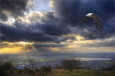 Pygargue africaine en vol sur le paysage magnifique et orageux