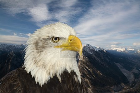 American symbol of hope bald eagle against mountain backdrop