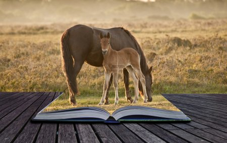 Photo for Mare and foal of New Forest pony grazing in landscape lit by warm sunrise in pages of magical book - Royalty Free Image