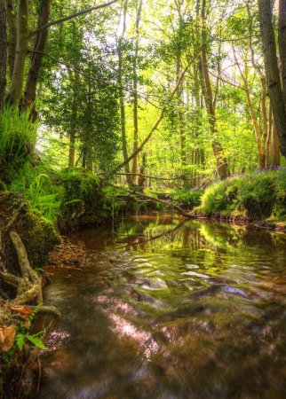 Low point of view along stream running through forest with deep