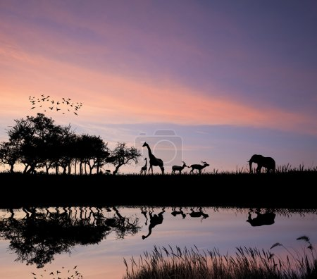 Photo for Safari in Africa silhouette of wild animals reflection in water - Royalty Free Image