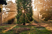 Inspirational dawn sun burst through trees in forest Autumn Fall