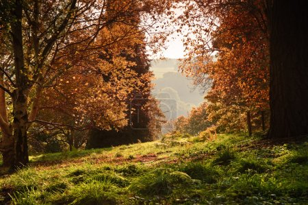 Landscape view through Autumn Fall forest into bright morning co