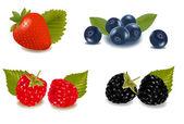 Raspberries blueberries blackberries and strawberry Photo-realistic vector illustration