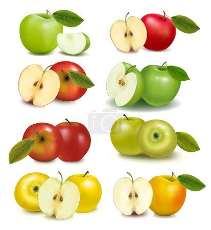 Set of red and green apple fruits with cut and green leaves. Vector illustr