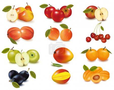 Illustration pour Groupe avec différentes sortes de fruits. Vecteur . - image libre de droit