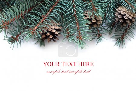 Photo for Fir tree branches with cones, isolated on the white background. - Royalty Free Image