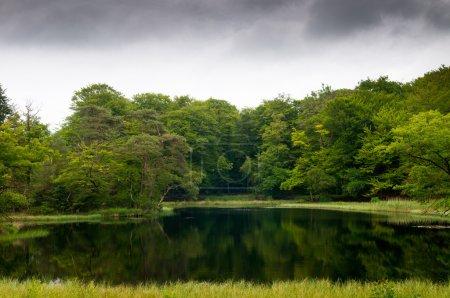 Photo pour Paysage magnifique lac dans une forêt - image libre de droit