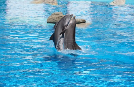 A pair of dancing dolphins in love on the water...