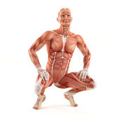 Mann Muskeln Anatomie System isoliert auf weißem Hintergrund. Pose sitzen