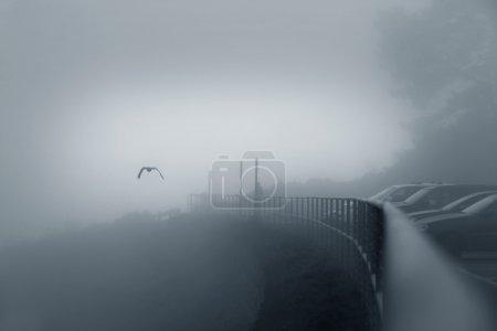 Photo pour Oiseau dans un brouillard au-dessus du pont, San Francisco, Californie - image libre de droit