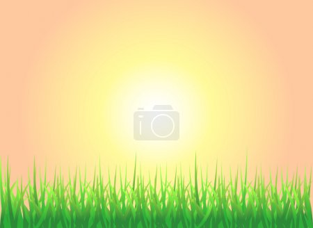 Sunset Grass Background