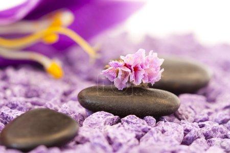 Photo pour Pierres avec fleur pourpre - image libre de droit