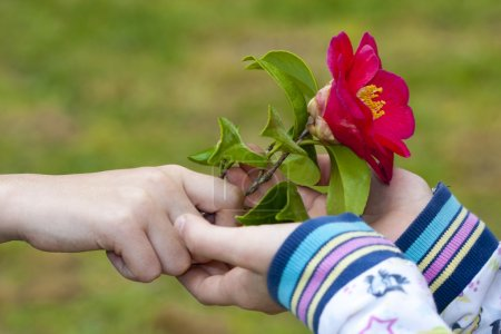 Photo for Hands of children giving flowers as a symbol of friendship and love - Royalty Free Image