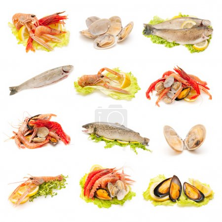 Photo for Collection of shellfish and fish on white background - Royalty Free Image