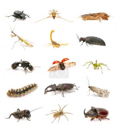 Insektensammlung isoliert auf weißem Hintergrund