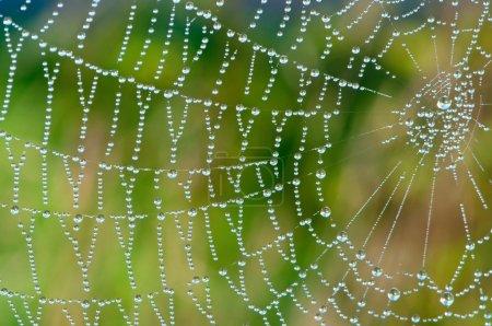 Beaded Cobweb