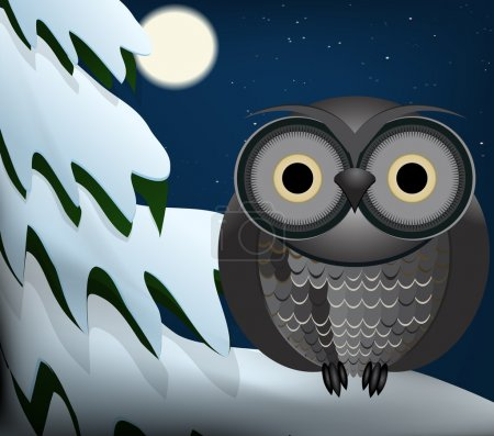 Owl sitting at night on snowed tree