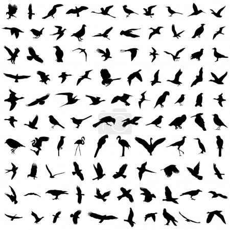 Illustration for Set of birds silhouette - Royalty Free Image