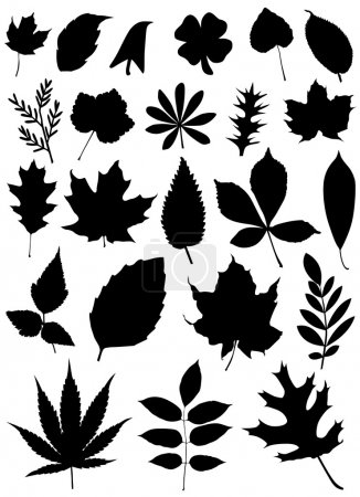 Illustration for Set of leaf silhouette - Royalty Free Image
