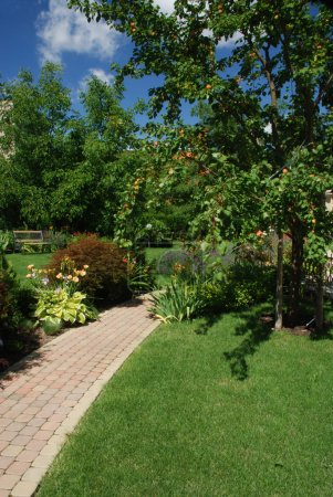 Garden with apricot