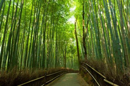 Photo pour Célèbre Bambouseraie à arashiyama, kyoto - Japon - image libre de droit