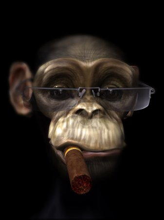 Mr Chimp the pimp