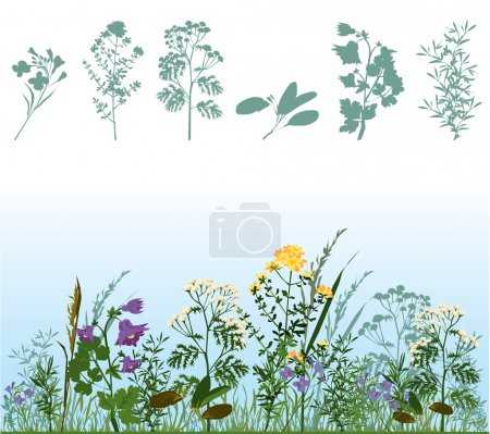 Herbs in meadow