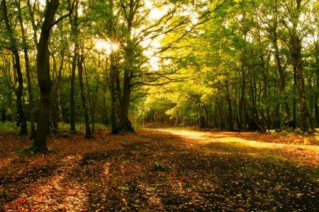 Photo pour Rayonnement solaire à travers les arbres de l'automne - image libre de droit