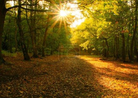 Photo pour Une petite piste à travers l'automne forrest avec le soleil qui brille à travers - image libre de droit