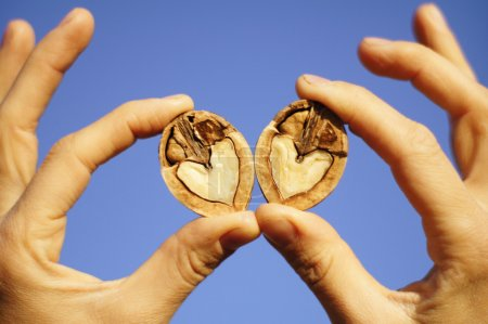 Two hands holdin a split heart shaped walnut against a blue sky background
