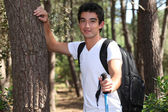 Young man hiking in a pine forest